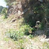 Bafra Belediyesi Lağım Suyunun Yola Akıtılması!