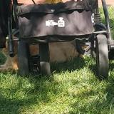 Beneto Bebek Arabasının Tekeri Kırıldı