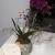 Çiçek Sepeti Görselden Çok Farklı Çiçek Gönderdi