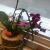 Çiçek Sepeti Dalı Kırık Çiçek Teslimi!