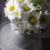 Çiçek Sepeti Çiçek İçindeki Küçük Sinekler