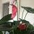 Çiçek Sepeti Yırtık Çiçekli Kırık Dallı Sipariş Teslim Ediyor!