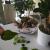 Çiçek Sepeti Hastalıklı Bonsai Göndermesi!